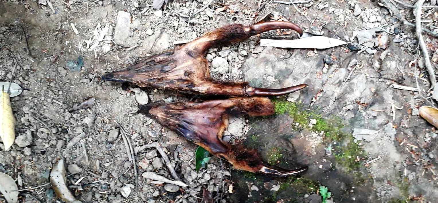 anti-poaching Anti-Poaching – the silent war Muntjac heads