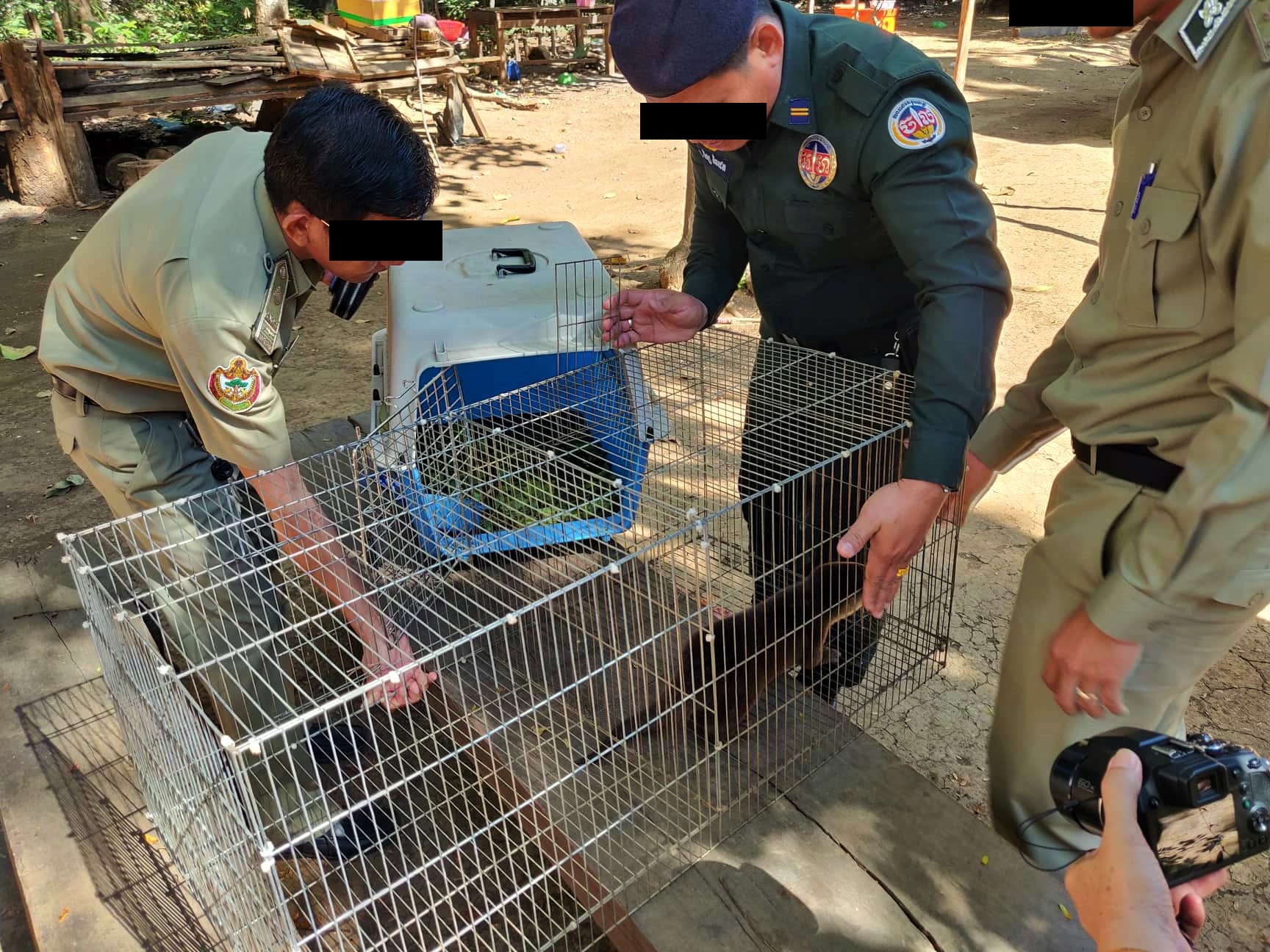 Smooth-coated otter rescue operation Smooth coated Otter saved by Wildlife Rapid Rescue Team