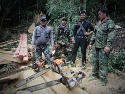 stihl Does STIHL know where their chainsaws are? Stihl chainsaws used to destroy tropical forest 1 400x300