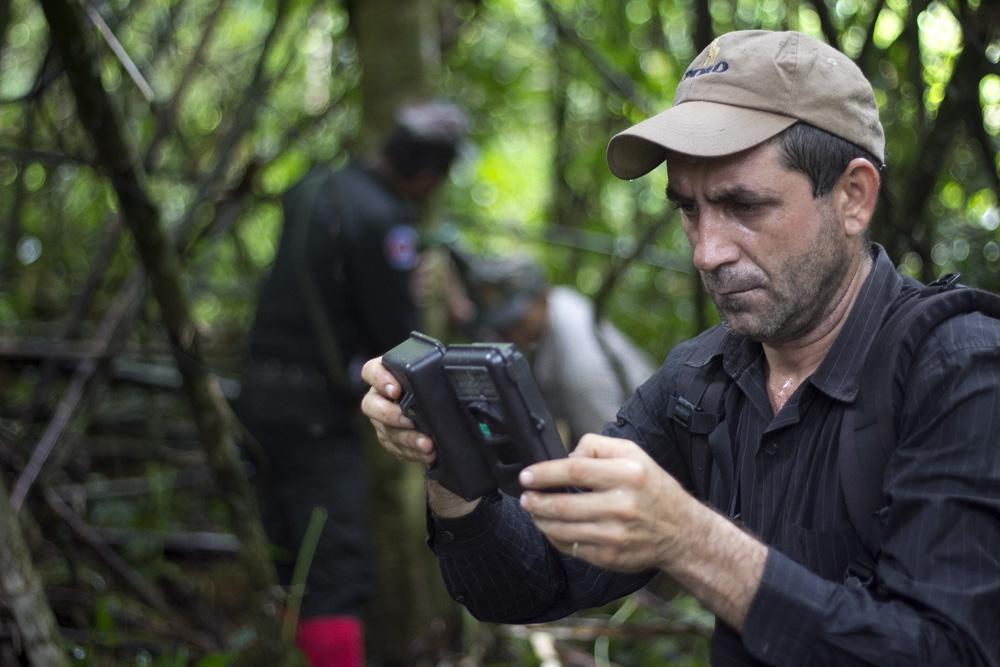 clouded leopard Clouded Leopard – Camera trap Wildlife Alliance Romica Grosu Camera Trap