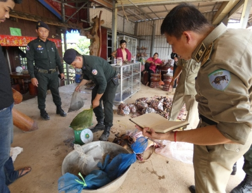 Wildlife Crime unit busts wildlife meat traders and rescues live turtles