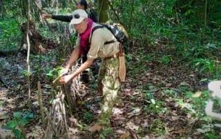 community rangers CAPU Anial traps 320x202