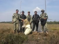 in the news In The News Illegal bird hunting 200x150