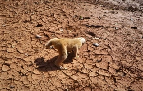 slow loris Slow loris rescued from a poacher's snare Slow loris Cambodia 460x295