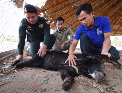 Asiatic black bear rescued by wildlife police unit