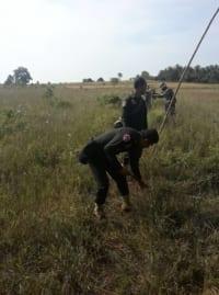 migratory bird hunting in koh kong Migratory Bird Hunting in Koh Kong Wildlife Alliance rangers dismantle bird traps 200x269
