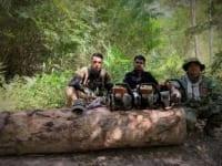 wildlife crime Wildlife Alliance – Committed to combating wildlife crime illegal logging 200x150