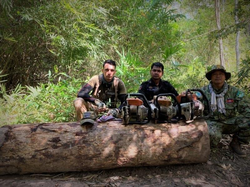 wildlife crime Wildlife Alliance – Committed to combating wildlife crime illegal logging 800x600