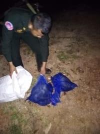 anti-poaching Anti-poaching team saved two monkeys from the illegal wildlife trade monkeys saved from poachers 2 200x267