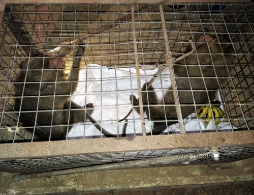 Anti-poaching team saves two monkeys from the illegal wildlife trade