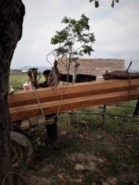 construction timber Construction Timber seized Construction Timber seized in raids in Cambodia 7 200x267