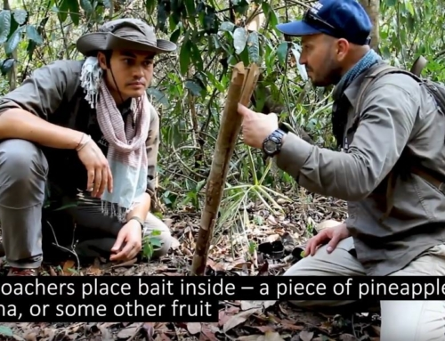 Henry Golding, about Kopi Luwak coffee victims