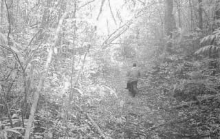 logger caught on camera Logger caught on camera Logger caught on Trail camera 320x202