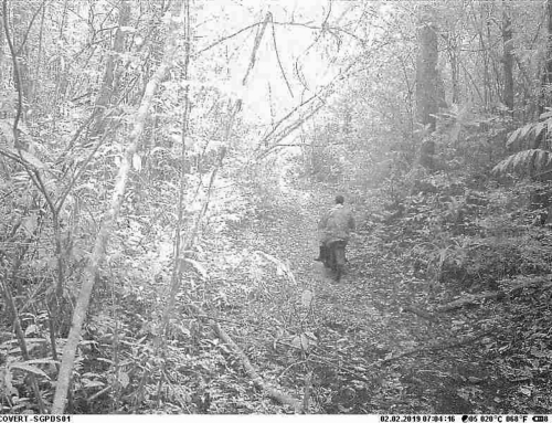 Logger caught on camera