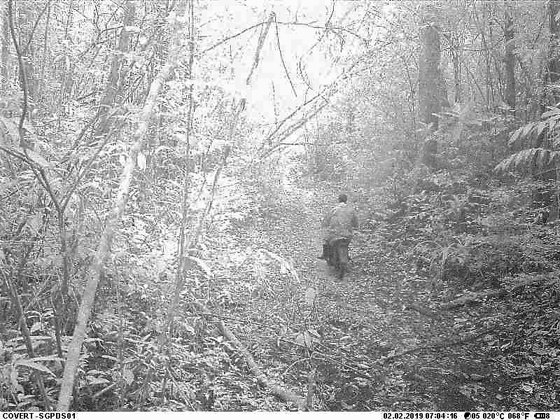 logger caught on camera Logger caught on camera Logger caught on Trail camera