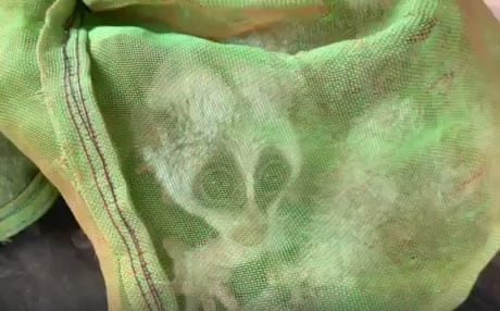 wildlife rescue Wildlife rescued after near suffocation in poacher's plastic container rangers rescue slow loris 460x286