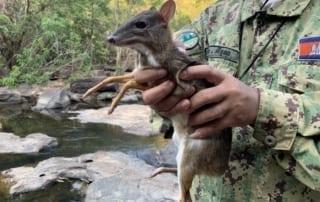 wildlife police Wildlife Police smallest deer in the world 320x202
