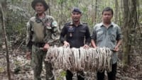 in the news In The News wildlife snaring  200x113
