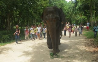 lucky, asian elephant, shows Lucky, Asian Elephant, Shows at Phnom Tamao Wildlife Rescue Center 2014 09 09 KE PTWRC Trip Kids walking with elephant 320x202 tamao wildlife rescue center Phnom Tamao Wildlife Rescue Center 2014 09 09 KE PTWRC Trip Kids walking with elephant 320x202