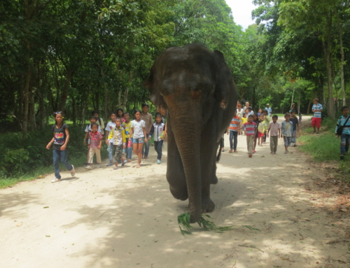Lucky, Asian Elephant, Shows at Phnom Tamao Wildlife Rescue Center