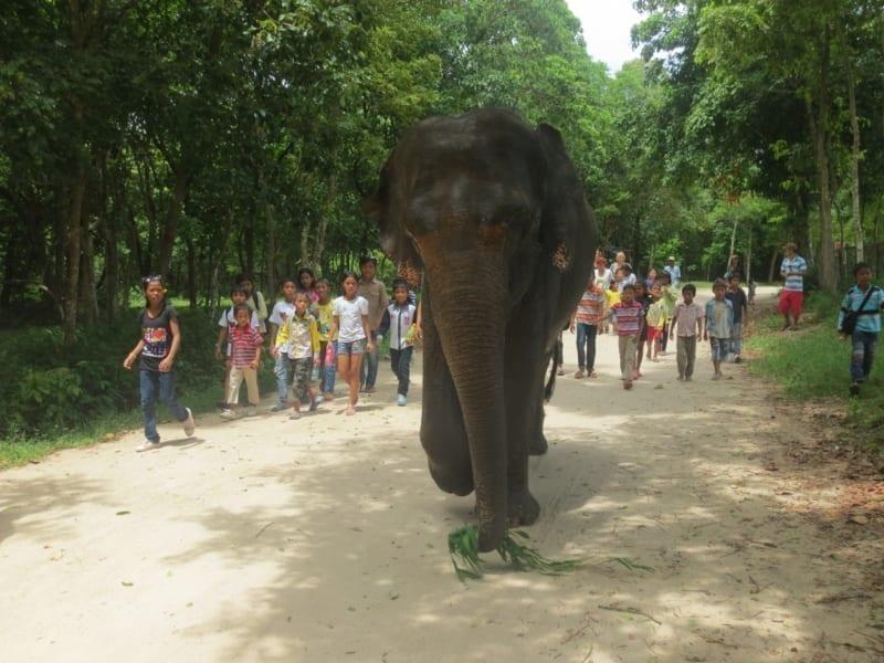 lucky, asian elephant, shows Lucky, Asian Elephant, Shows at Phnom Tamao Wildlife Rescue Center 2014 09 09 KE PTWRC Trip Kids walking with elephant 800x600