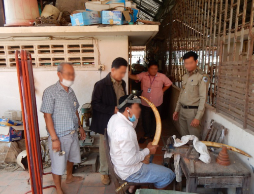 Phnom Penh Ivory Shop Owner Arrested