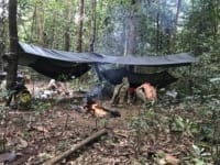 Camping deep in the forest to catch hunters and loggers Camping in rainforest 200x150