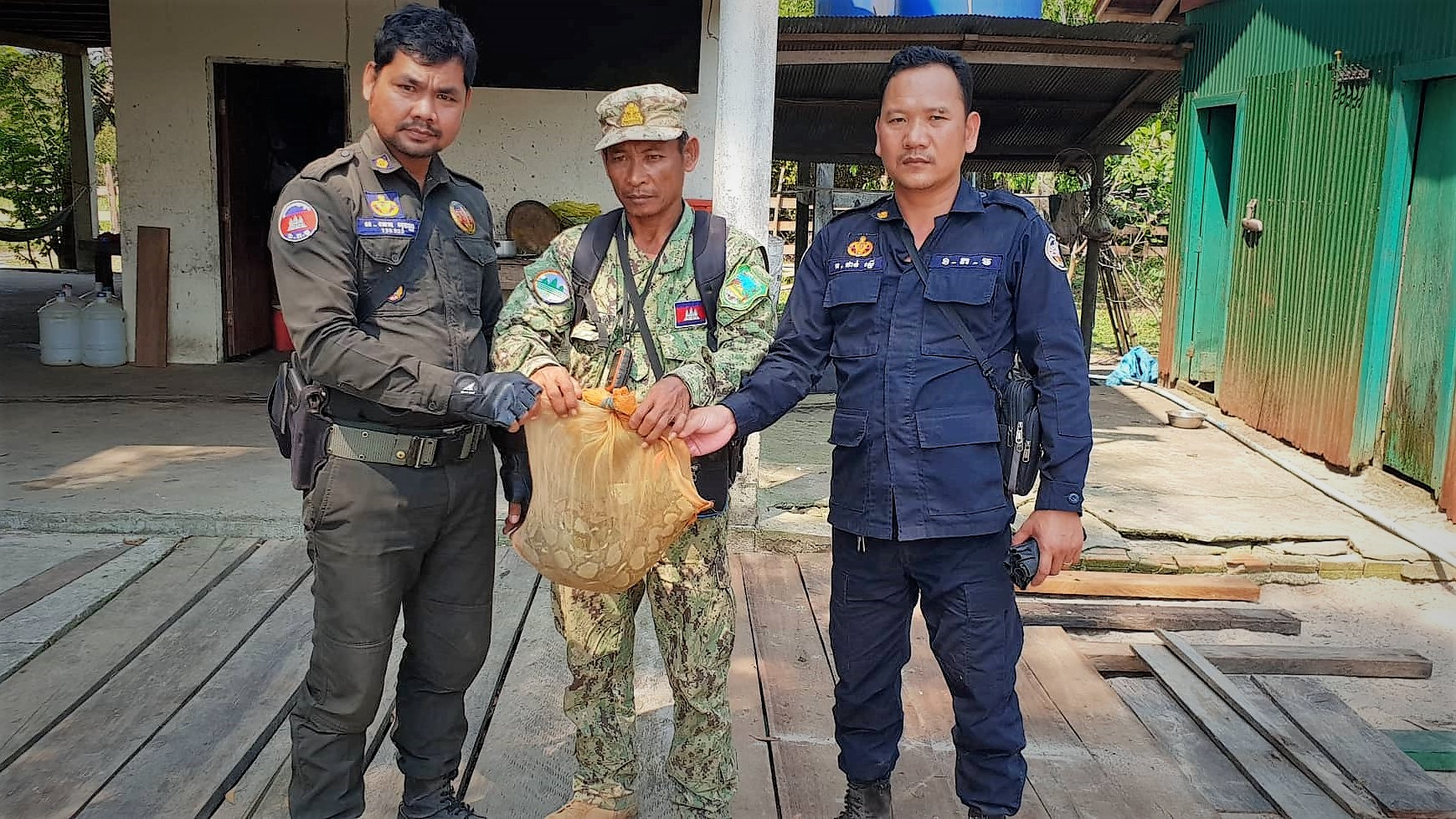 The largest snake native to Asia Python reticulatus saved from the illegal wildlife trade