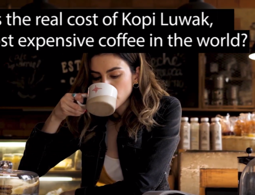 What is the real cost of Kopi Luwak coffee? VIDEO
