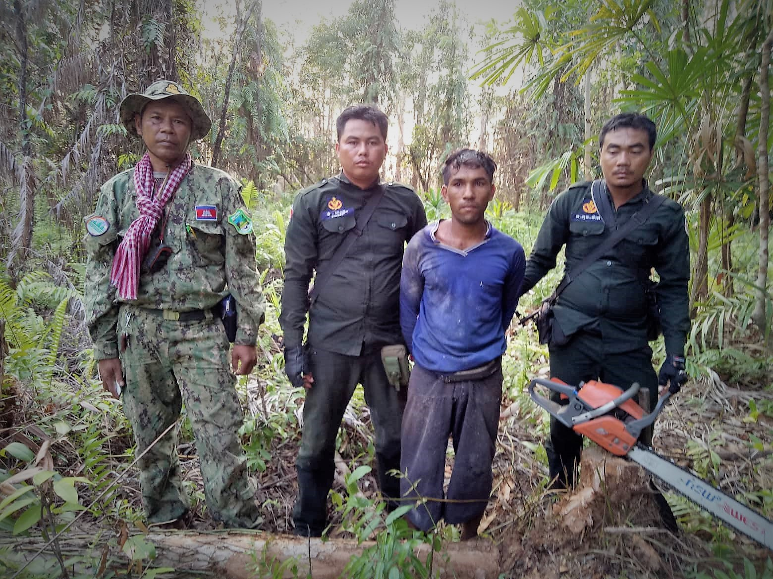 saving the rainforest Saving the rainforest offender cought for illegal logging