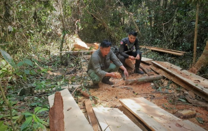 sponsor the asian elephant station Sponsor the Asian Elephant Station tree cut down illegaly 700x441