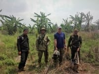 in the news In The News Illegal Chainsaws collected by Wildlfie Alliance rangers 200x150