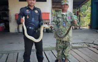 Reticulated python, world's longest snake Reticulated python Cambodia 320x202