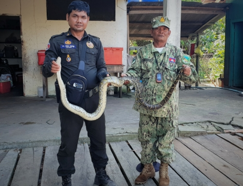 Reticulated python, world's longest snake
