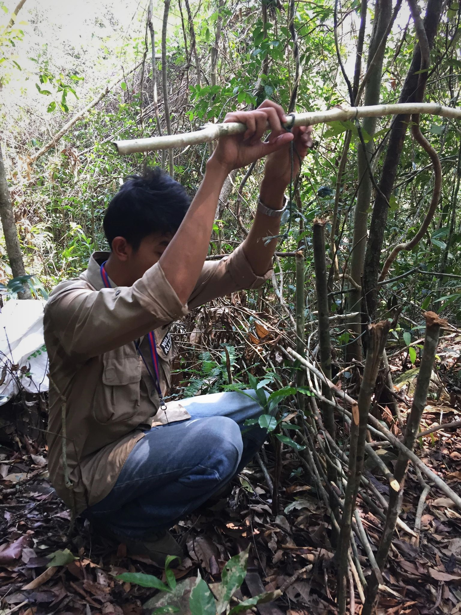 ban snares Call for ban of snares – Dhole caught in snares graphic content Wildlife Alliance rangers collecting animal wild traps