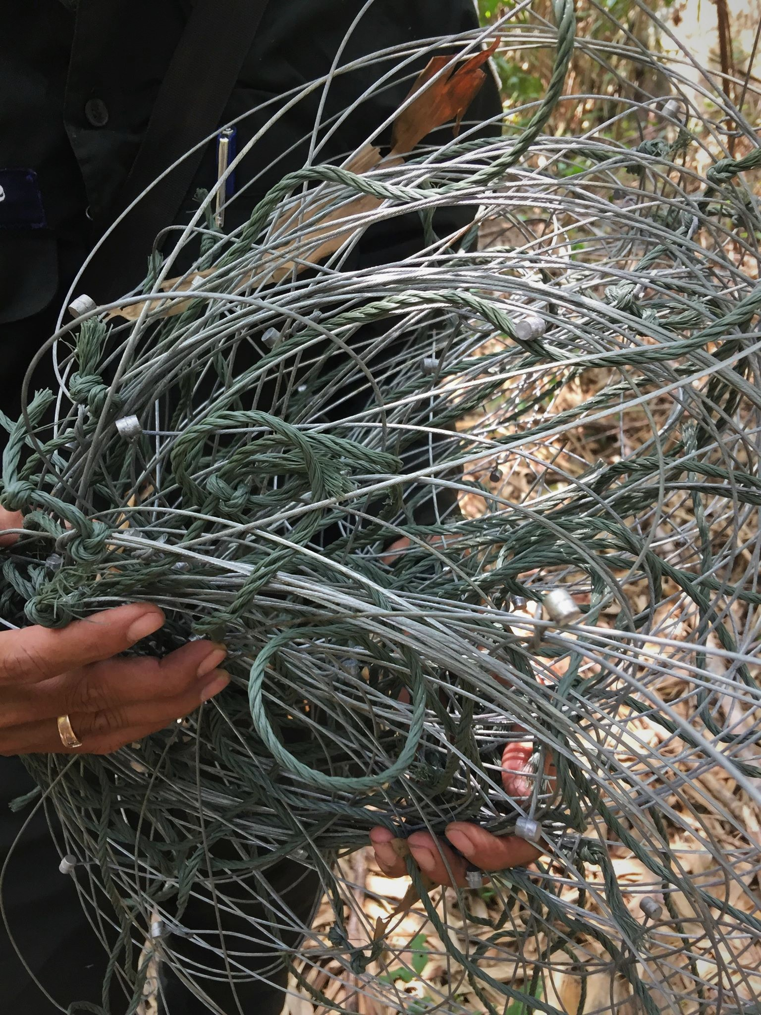 ban snares Call for ban of snares – Dhole caught in snares graphic content animal traps 1
