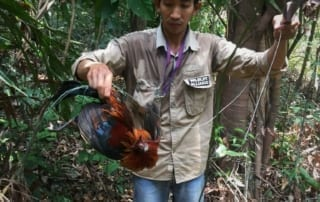 ban snares Call for ban of snares – Dhole caught in snares graphic content lethal weapons that trap and kill animals 320x202 newsletter Newsletter lethal weapons that trap and kill animals 320x202