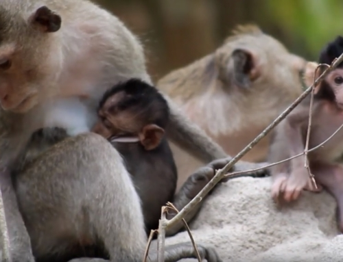 Statement re: macaque rescues