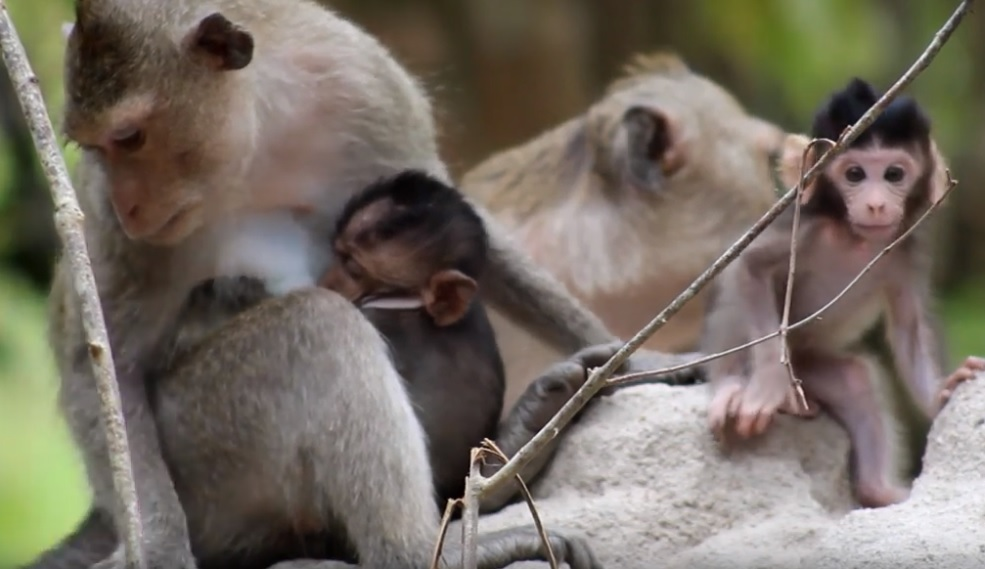 statement re: macaque rescues Statement re: macaque rescues macaque rescues youtube