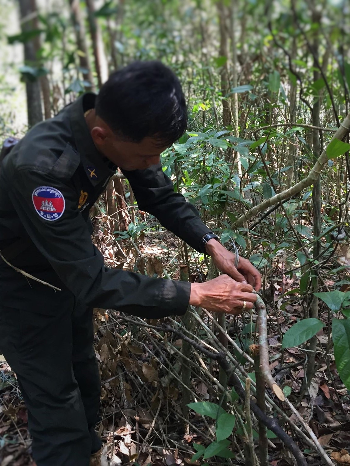 ban snares Call for ban of snares – Dhole caught in snares graphic content snares annimal traps Cambodia
