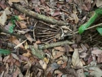 in the news In The News wild animals traps in Cambodia 200x150