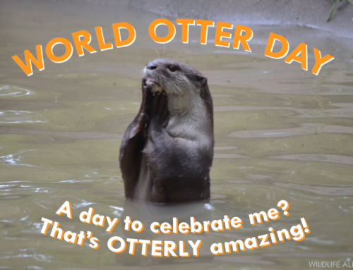 Happy World Otter Day – May 25, 2019