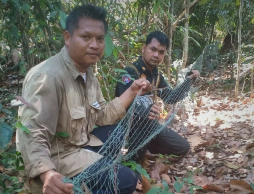 Wildlife Alliance rangers dismantle hunting nets