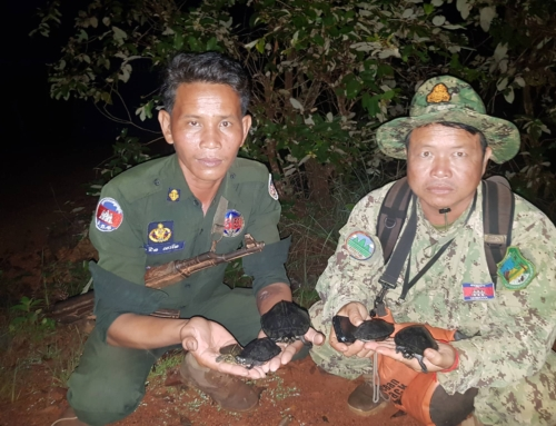 From a poacher's grip back into the wild; five Vulnerable turtles are rescued by rangers