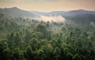 Cardamom Rainforest Cambodia