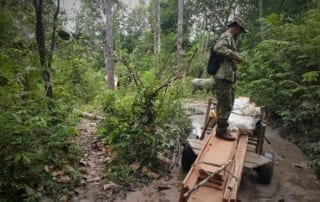 Illegal Logging - Central Cardamom National Park