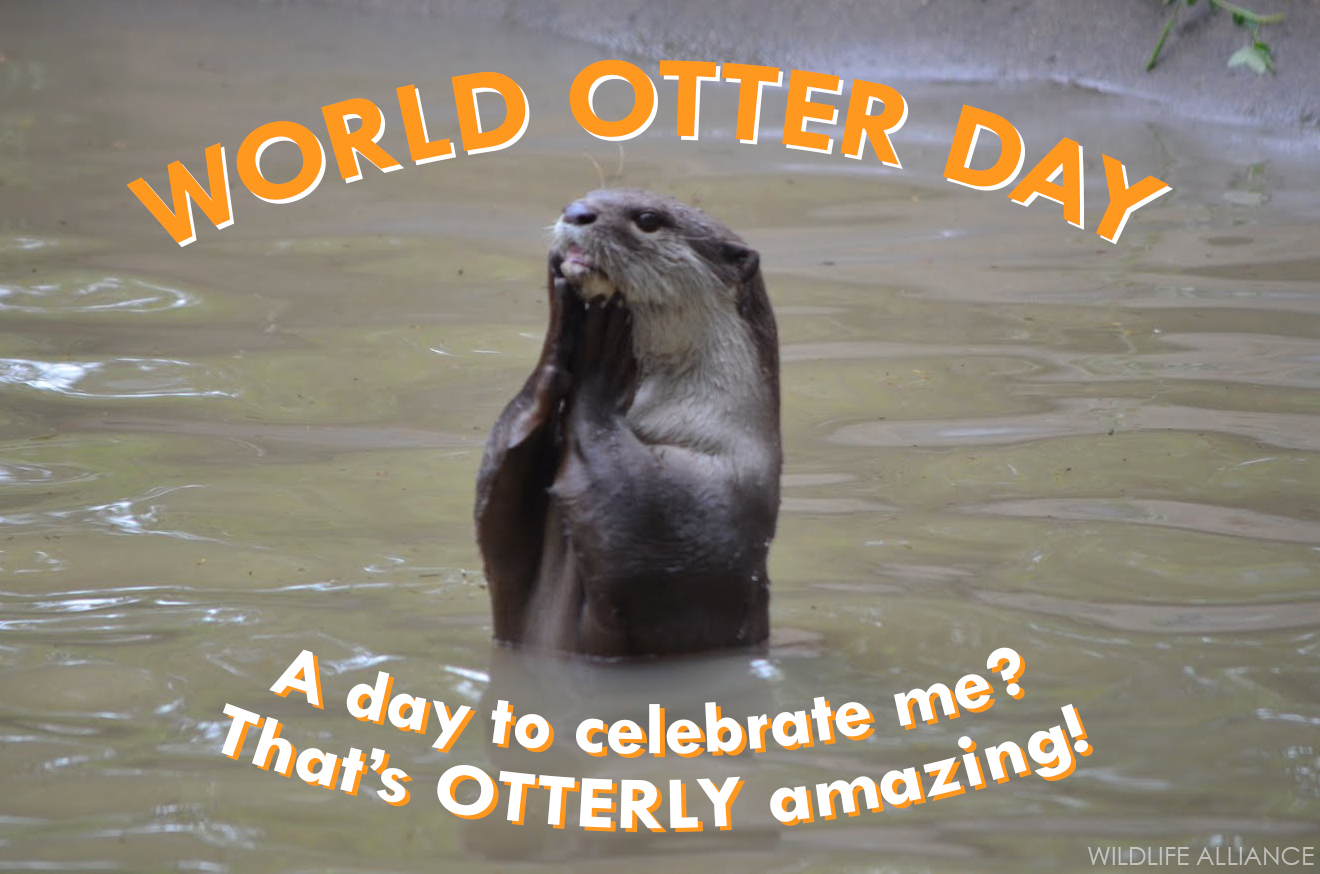 Happy World Otter Day - May 29, 2019